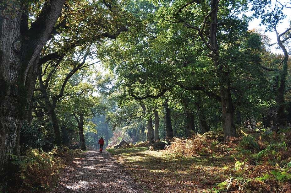 New Forest October morning