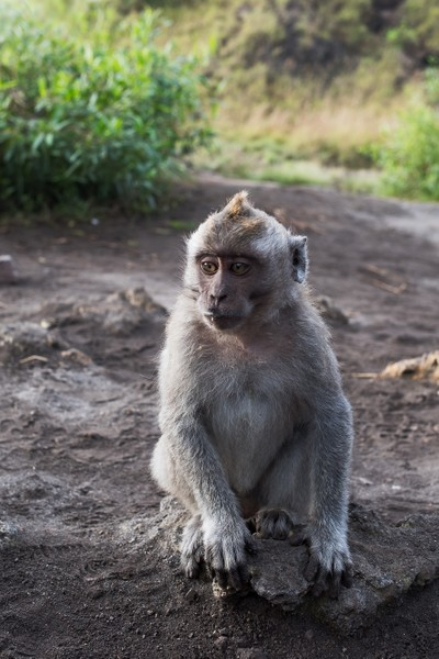 What's in a monkey that enjoys sitting in the sun?
