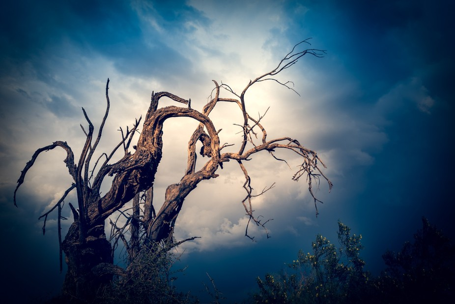 Sometimes there can be beauty even in dead trees, especially when photographed against a dramatic...