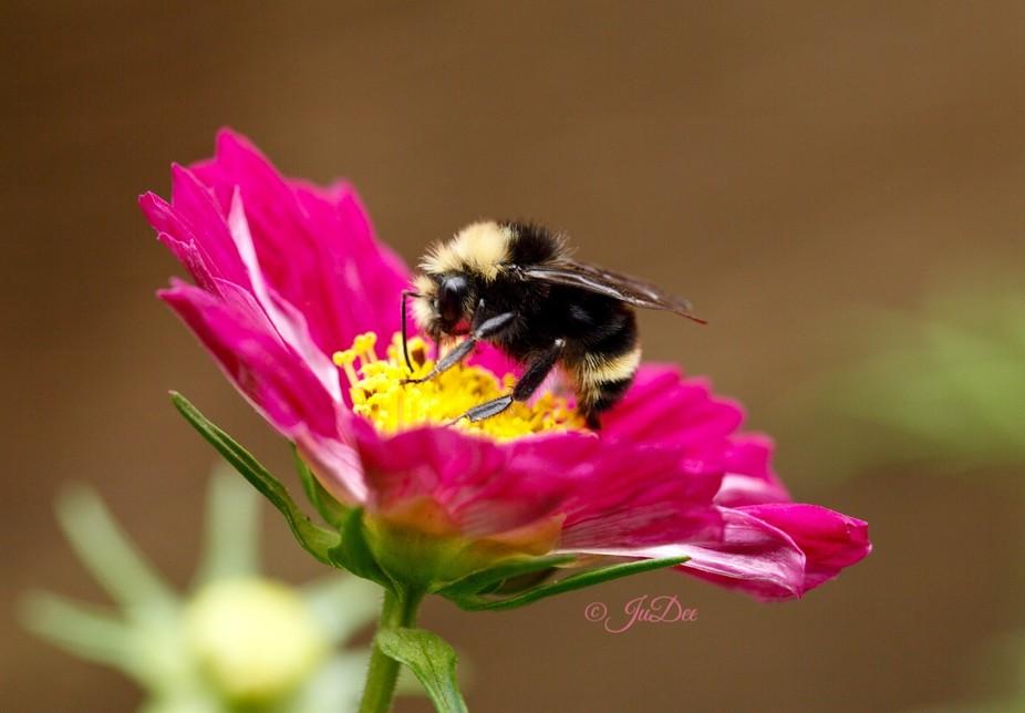 Taken in my garden