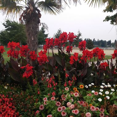 Flowers & Palms of Parksville Park - Sept. 5, 2017