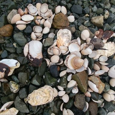 The Shell Collection - Piper's Lagoon, Nanaimo 12 August 2017