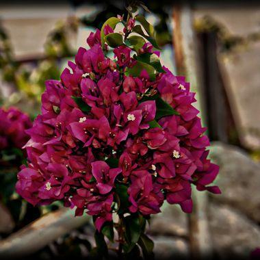 Lovely bloom.