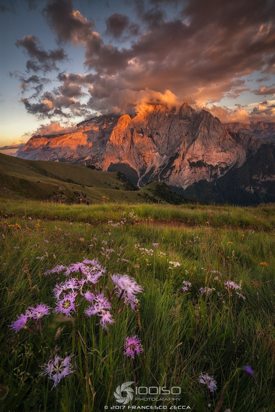 un fiore per la regina  by Francescozeccaphotography - Image Of The Month Photo Contest Vol 26