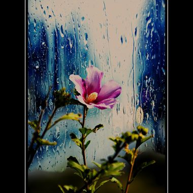 Pink flower manipulation.