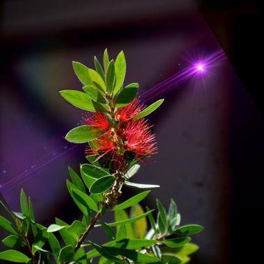 Flower & Purple Light manipulation.