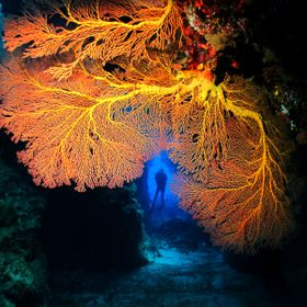 Gorgonian Tunnel
