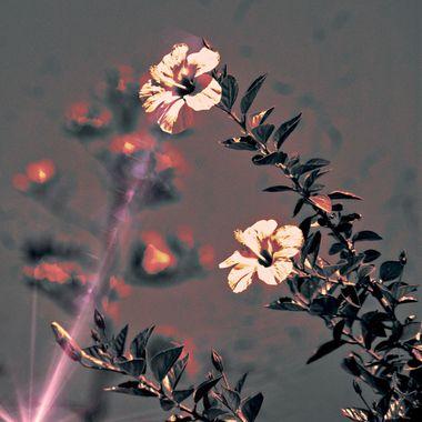 Flowers and beam of light.