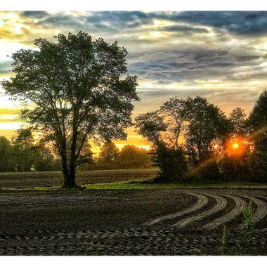 Sunrise in Field Rows