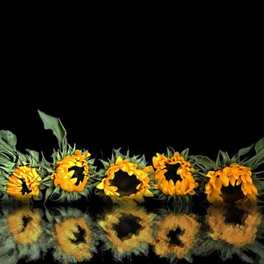 Reflected Sunnies