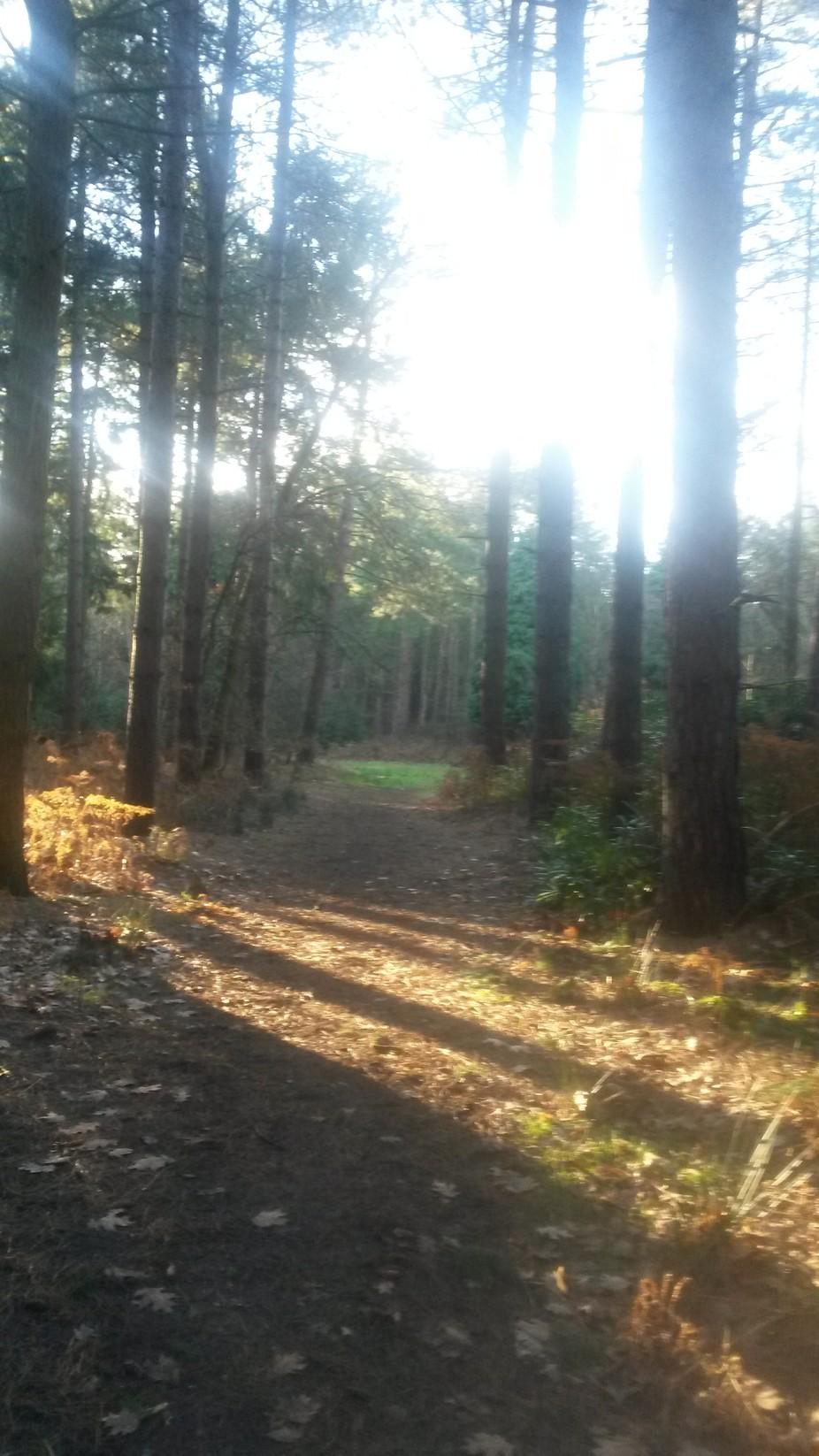 A delightful walk through the woods in Norfolk