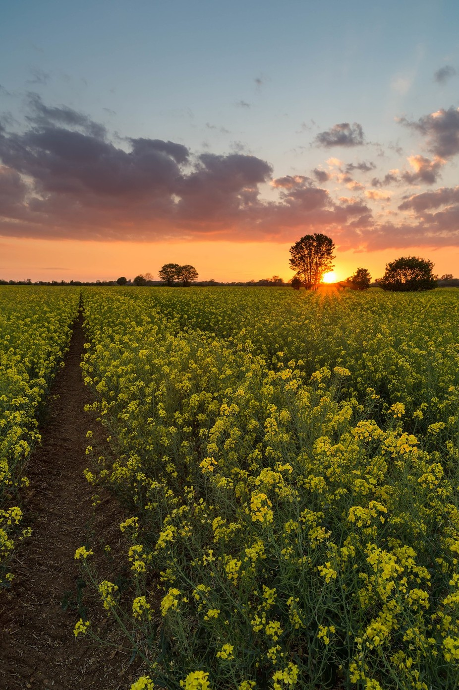 Out in the Fields by SteffenE - Covers Photo Contest Vol 42