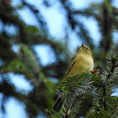 Up high lookin fir beasties
