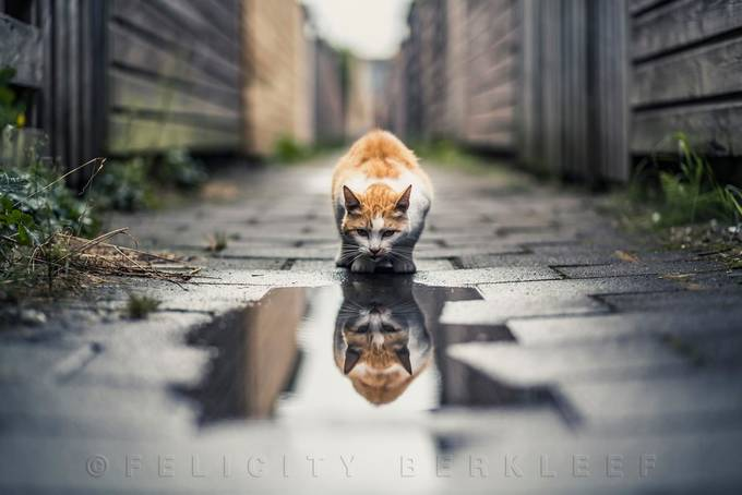 Double Trouble by felicityberkleef - Animals And Water Photo Contest