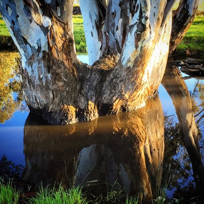 Reflections of an old bushman