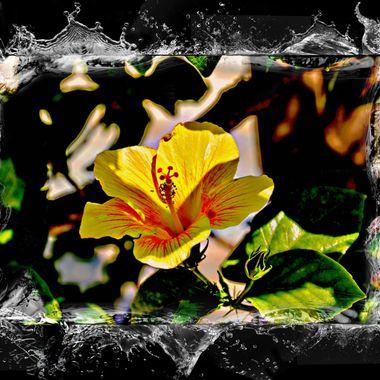 Beautiful yellow flower manipulation.