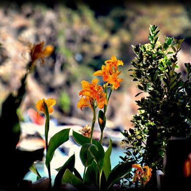 Flowers in Greece.