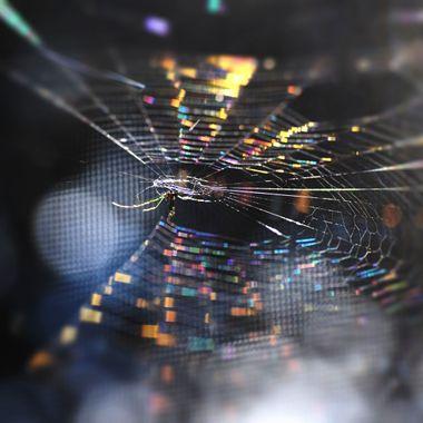 That 70s Spiderweb