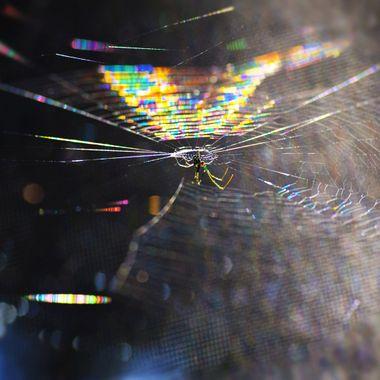 Spider in Raindow Web