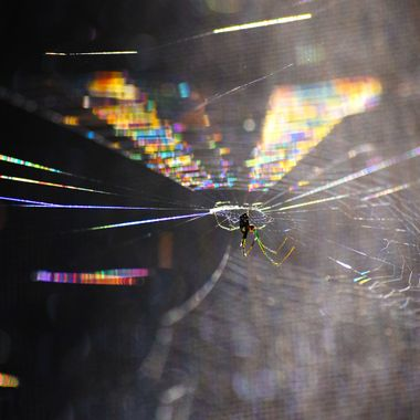 Rainbow Web with spider