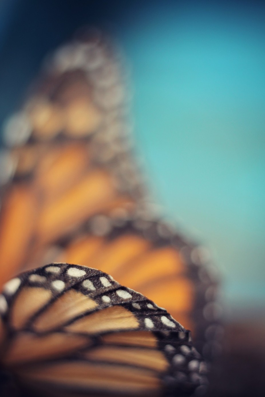 On the Edge of Flying by KunstFabrik - Macro And Patterns Photo Contest