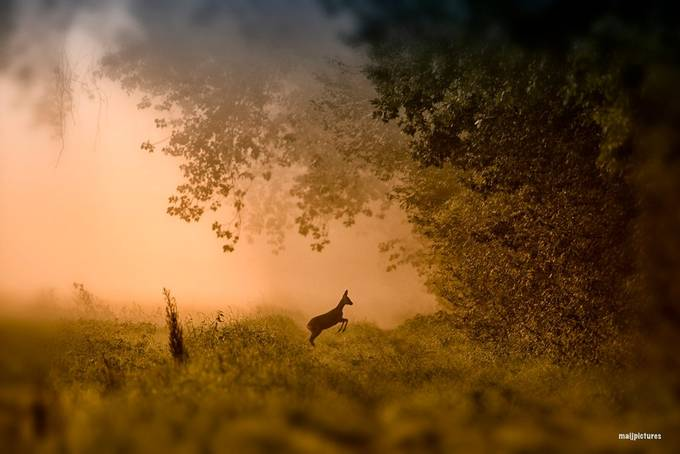deer in the morning  by Fotomay1 - Image Of The Month Photo Contest Vol 26