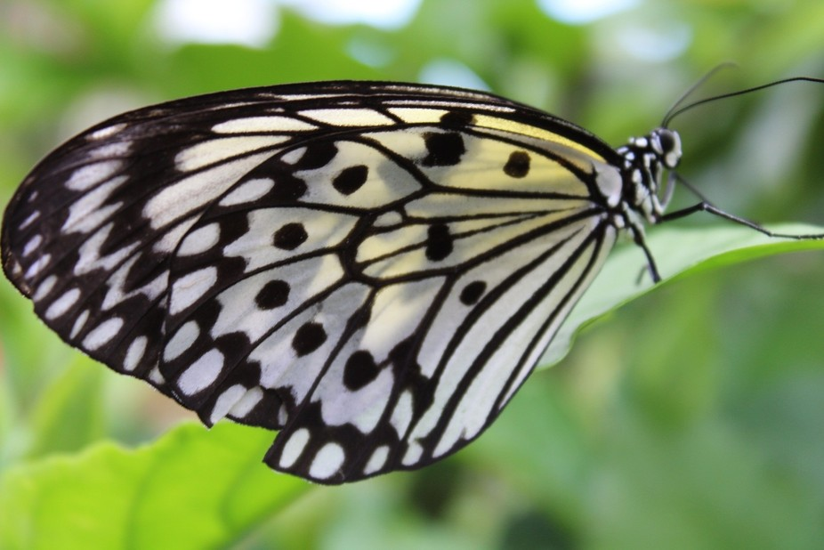Taken at Butterfly World in Coconut Creek, Florida.  The Butterfly Capital of the world. If you h...