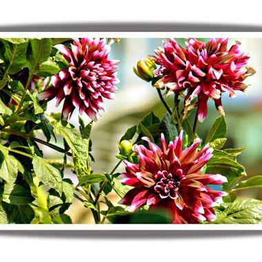 Lovely flowers in Greece.
