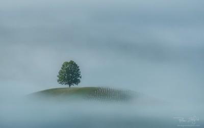 Misty window