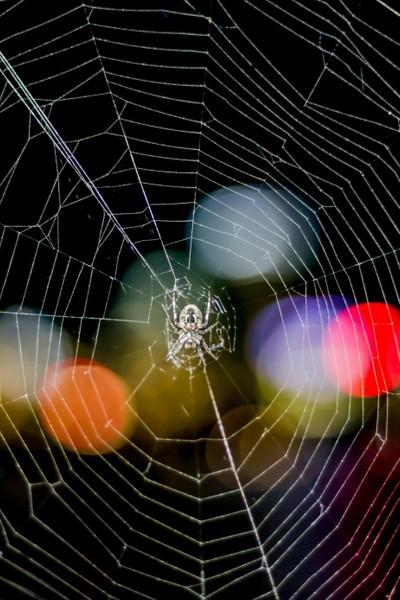 Spider Tranquillity