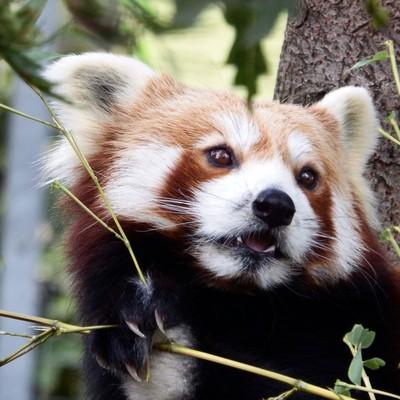 I like bamboo!