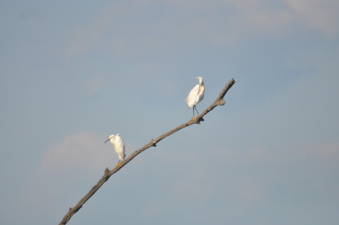 Bombay Hook National Wildlife Refuge Smyrna, Delaware Leipsic River, Bear Swamp,