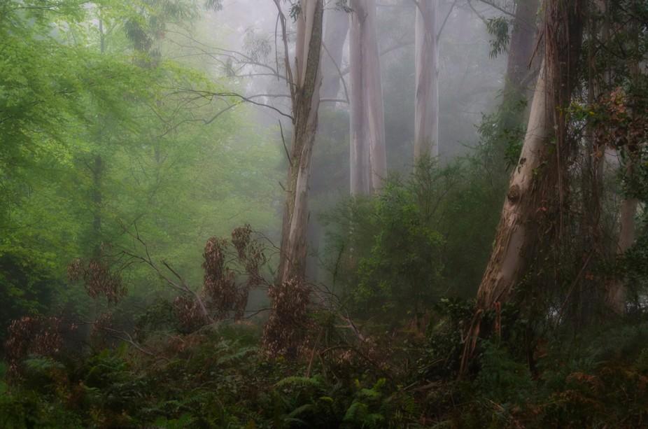 Bushland Fantasy