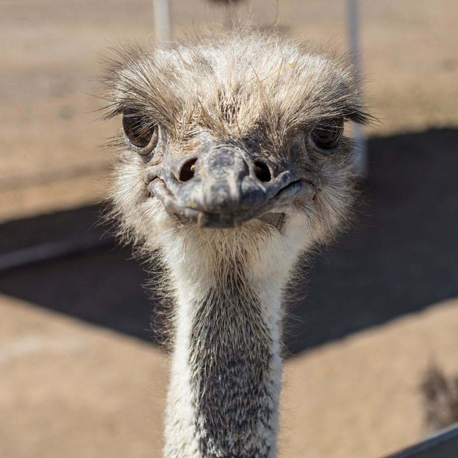 So you're a wise guy is what this ostrich's expression implies