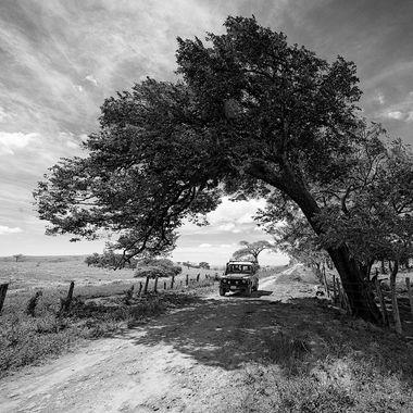 defender tree arch