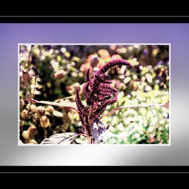 Manipulated Flower.