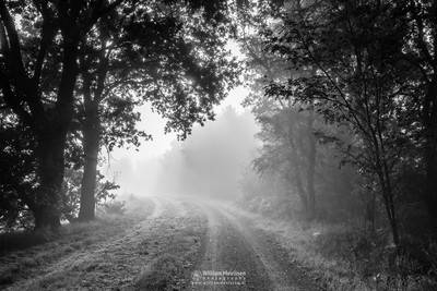 Path Into The Misty Light