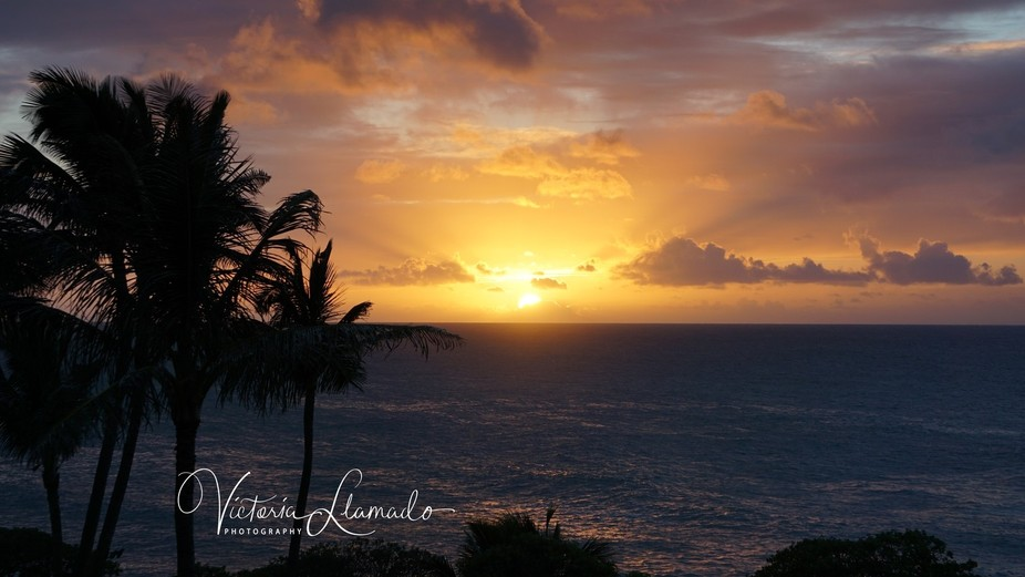This was from my balcony at the Turtle Bay Resort at sunset. Unfiltered