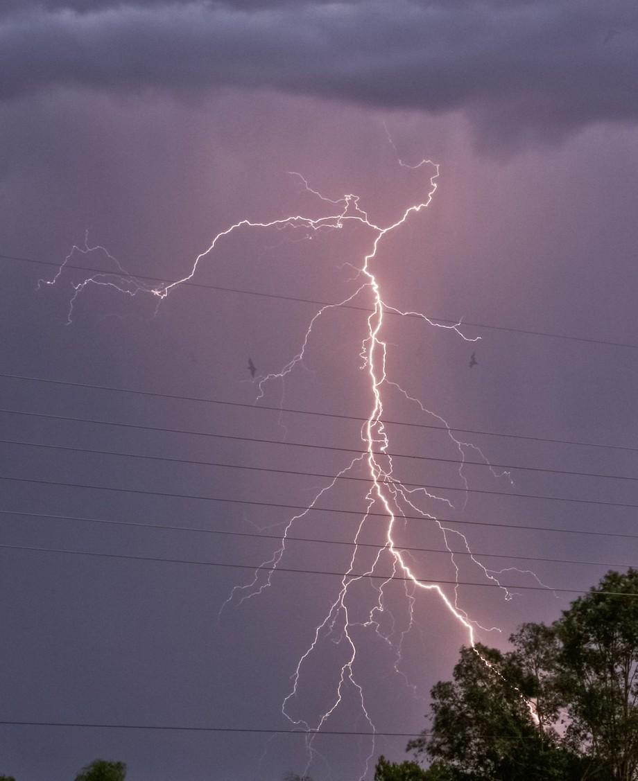 Lightning illuminates flying birds just right.