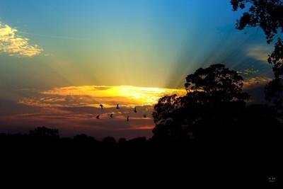 Birds Fying Sunset