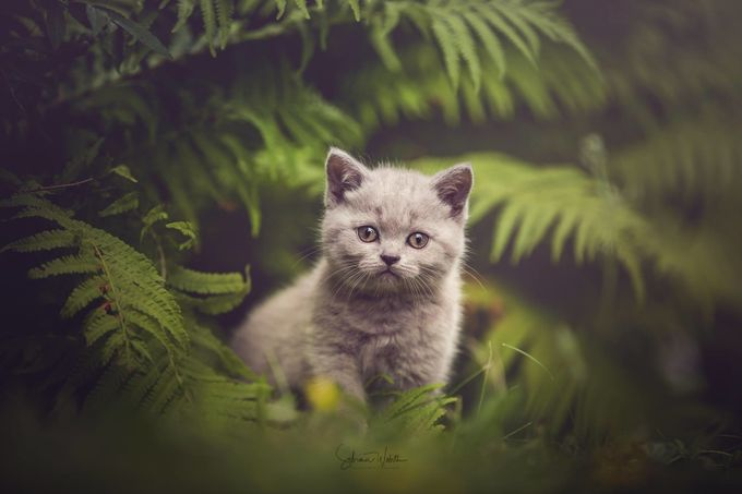Jungle Cat by sabrinawob - Only Pets Photo Contest