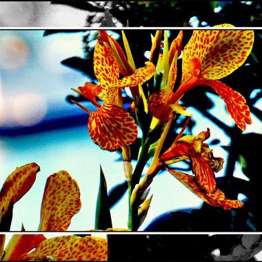 Flowers at Kerveli.
