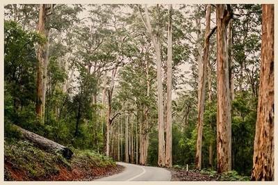 Karri Forest