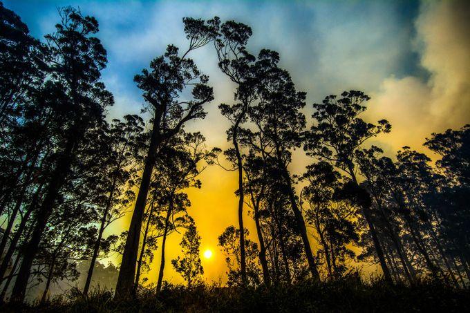 Broulee Bushfire 13092017 26 by jimfazOz - Everything Smoke Photo Contest