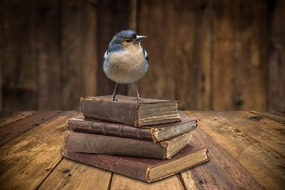 Bird on Books