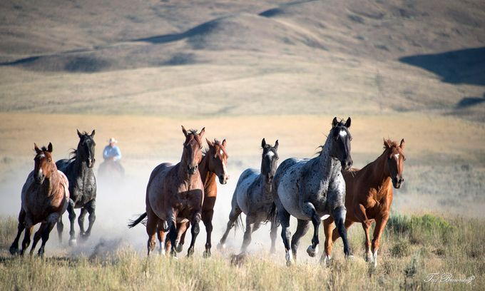 Herd of Horses by tadbrowning - Fast Photo Contest