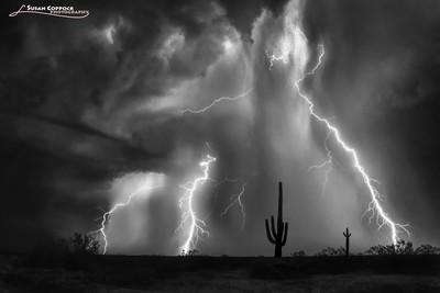 Electric Saguaro