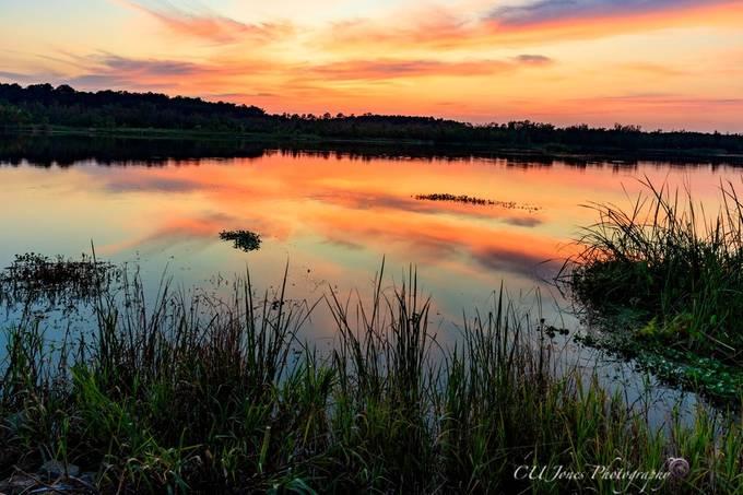 Sunset at  Bushy Park Boat Landing in Goose Creek, South Carolina.