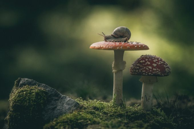 Fly agaric by DanielSE - Image Of The Month Photo Contest Vol 26