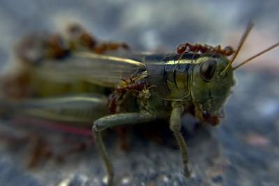 Grasshopper's Bad Day